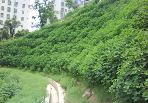 园林景观墙,排水沟等
